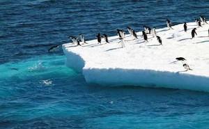 Nam Cực ghi nhận tình trạng tuyết rơi kỷ lục do... Trái đất nóng lên
