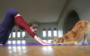 Bạn đã biết đến Doga - Trào lưu kỳ lạ tập yoga cùng... cún?
