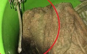 Đỉnh cao của ở bẩn, quần áo nấm mốc mọc thành cây dài 30cm