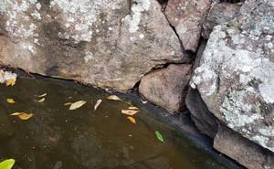 Nếu muốn nhảy xuống hồ nước này để tránh cái nóng đầu hè, bạn có thể trả giá đắt!