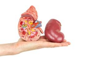 Người thận khỏe mới có thể sống thọ: 4 giải pháp chăm sóc thận không tốn kém lại hiệu quả