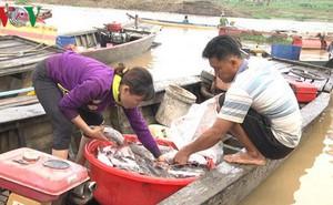 Hàng trăm tấn cá bè trên sông La Ngà chết trong đêm