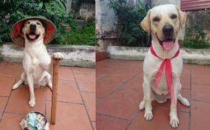 Chuyện về chú chó tên Củ Cải chơi bóng ở vị trí thủ môn giỏi như Bùi Tiến Dũng