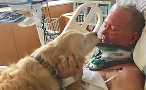 10 bằng chứng cho thấy chó là loài vật tình cảm nhất vũ trụ