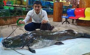 Bắt được cá lăng khủng cực hiếm trên sông Tiền
