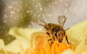 Phát hiện bằng chứng loài ong hiểu được số 0 nhỏ hơn 1?