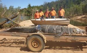 Bắt sống cá sấu khổng lồ, nặng 600kg sau 8 năm truy lùng ròng rã