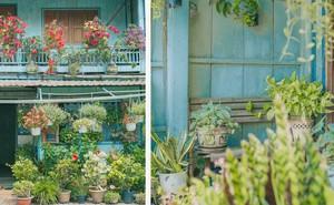 """Ngôi nhà xanh mát bóng cây của cô giáo nghỉ hưu khiến ai cũng mơ về """"xóm nhỏ, phố nhỏ, nhà tôi ở đó"""""""