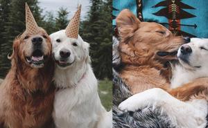 Câu chuyện cảm động của 2 chú chó lúc nào cũng dính lấy nhau như hình với bóng, sở hữu gần 500 nghìn lượt follow trên Instagram