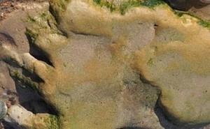 Phát hiện dấu chân khủng long khổng lồ ở Scotland