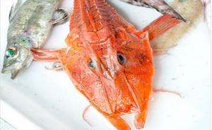 12 loài giáp xác kỳ dị mới được phát hiện dưới đáy biển sâu