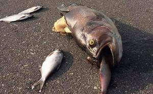 24h qua ảnh: Cá mắc cạn hàng loạt trên đường phố sau lũ lụt ở Mỹ