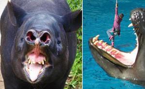 Những loài vật này thực sự xứng đáng có một bộ phim kinh dị dành riêng cho mình