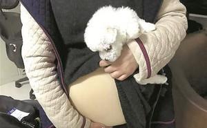 Giả vờ mang thai để đưa chó cưng lên máy bay, cô gái rước rắc rối vào người