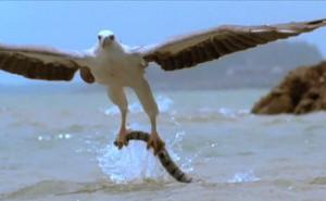 Video: Cuộc chiến tàn khốc giữa chim đại bàng và rắn cực độc