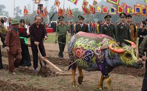 Phó Thủ tướng mặc áo nâu xuống ruộng dắt trâu đi cày ở lễ hội Tịch Điền