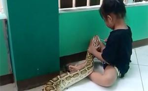 'Hú hồn' cảnh bé gái 3 tuổi chà nướu cho con trăn dài 4,5 mét