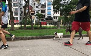 Kinh hãi chó không rọ mõm chạy rông trong công viên Thống Nhất