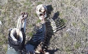 Bộ xương người bị thú vật gặm nát giữa đồng và lý do kinh hoàng phía sau