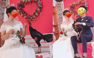 """Cặp đôi mang gà chọi đi chụp hình cưới khiến thợ ảnh """"méo mặt"""""""
