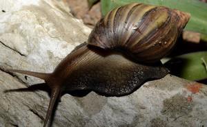 Con ốc sên trong hình đã chết và nó đã khiến cả cộng đồng khoa học phải tiếc thương