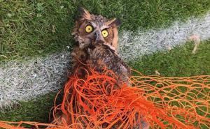 Chuyện động vật kẹt trong lưới sân bóng: tưởng đơn giản mà hậu quả nghiêm trọng không ngờ
