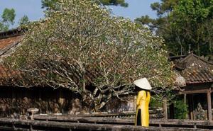 Miễn vé cho phụ nữ mặc áo dài khi tham quan di tích Huế