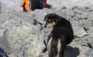 Lẽo đẽo theo sau đoàn leo núi, cô chó hoang lập kì tích khi lên tới đỉnh dãy Himalaya cao hơn 7000 mét