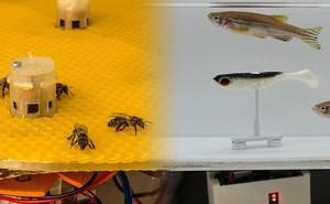 Đột phá khoa học: Robot phiên dịch giữa ong và cá