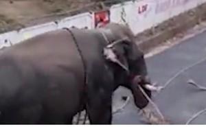 Video: Voi bất ngờ nổi loạn, lật tung ô tô