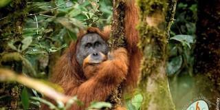 [Ảnh] 10 sinh vật kỳ lạ và độc đáo nhất mà các nhà khoa học đã phát hiện ra trong năm 2018