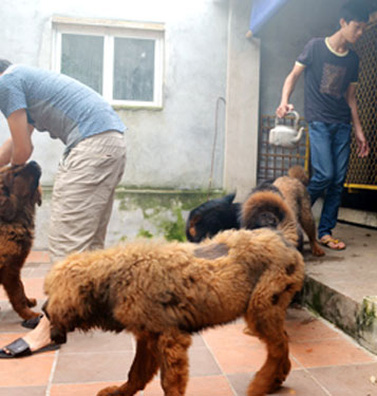 Trại nuôi 'thần khuyển' của Thạc sĩ Ngữ Văn ở đất Quảng
