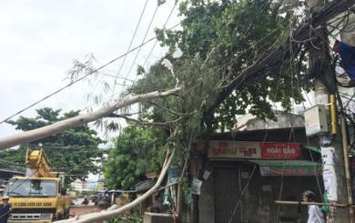 """Luật """"rừng"""": Hợp tác xã đòi phạt tiền dân vì bão làm đổ cây"""