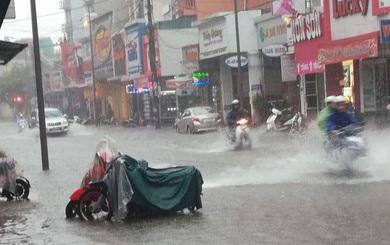 Clip: Người dân bắt cá ngay trên đường phố giữa tâm bão số 4