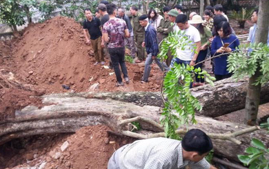 Cây sưa 26 tỷ ở Bắc Ninh: Gia đình Chủ tịch xã được chia 40 triệu đồng