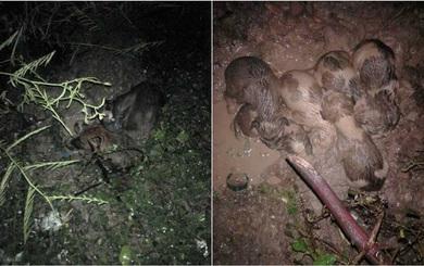 7 chú chó con sinh ra trong vũng bùn và hành động của nhóm bạn trẻ gây xôn xao