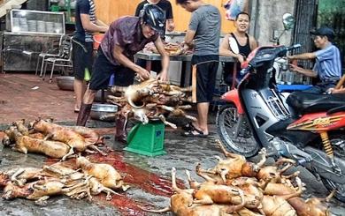 Chuyện đáng sợ ở làng thịt chó lớn nhất Thủ đô