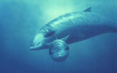 Mổ xác cá voi dạt bờ, khoa học tìm thấy vật chứng kinh dị về tác động của con người đến đại dương