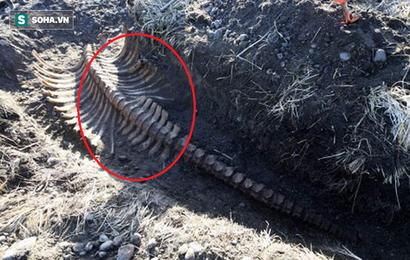 Phát hiện bộ xương không đầu của quái vật biển bí ẩn ở Nga