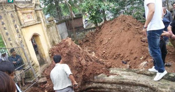 Bán cây sưa 26 tỷ ở Bắc Ninh: Mỗi người dân được chia từ 5 – 10 triệu đồng