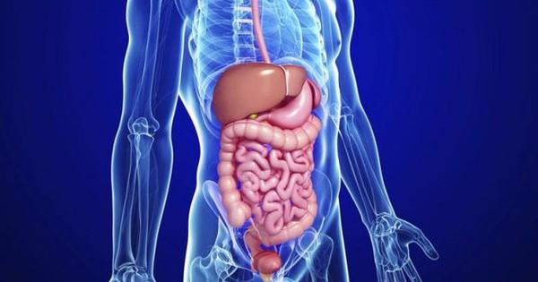 Uống rượu bia thường xuyên: 5 cơ quan nội tạng