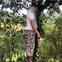 Vụ 2 cháu bé tử vong, thi thể đựng trong balo ở Bà Rịa - Vũng Tàu: Người cha nghi đã chết tại Đắk Nông
