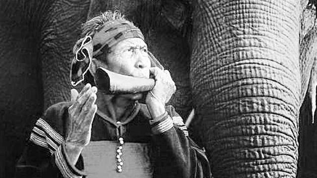 3 thảo dược đại ngàn quý hơn cả Viagra của vua voi 102 tuổi, 4 vợ