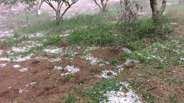 Mưa đá suốt 3 tiếng ở Sơn La khiến mận rụng, thiệt hại nặng nề