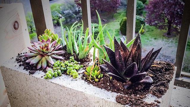 16 ý tưởng trồng cây tiết kiệm diện tích trong nhà nhỏ