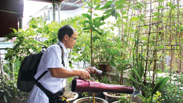 Bộ Y tế sẽ xem xét thả muỗi vằn Wolbachia để diệt muỗi gây sốt xuất huyết