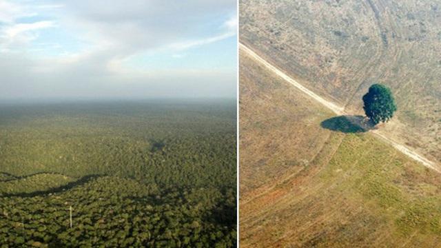 Ngắm nhìn vẻ đẹp của quê hương trăn Anaconda, và cái cách con người đã phá hủy nó