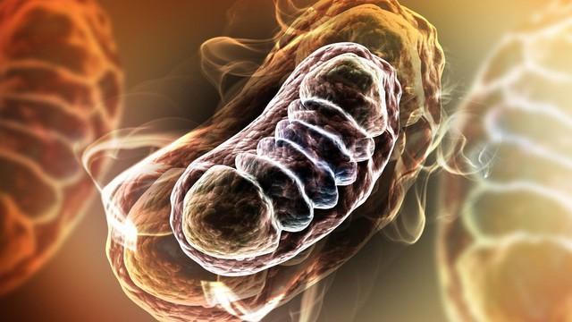1 triệu chứng cảnh báo ung thư phổi giai đoạn đầu: Phát hiện sớm 90% cơ hội chữa khỏi bệnh