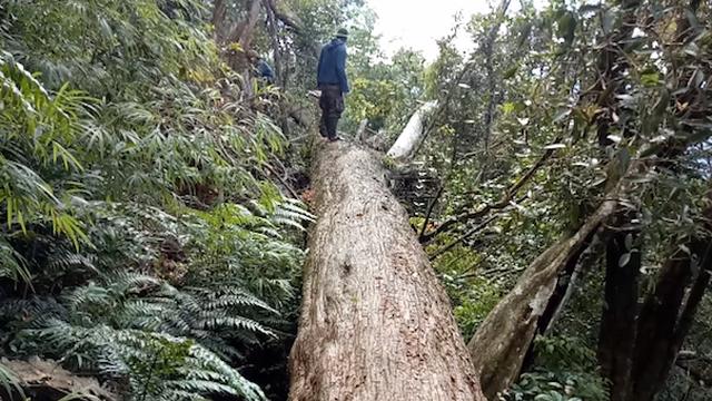 Khởi tố thêm 2 cán bộ kiểm lâm vì để gỗ quý hiếm bị chặt phá