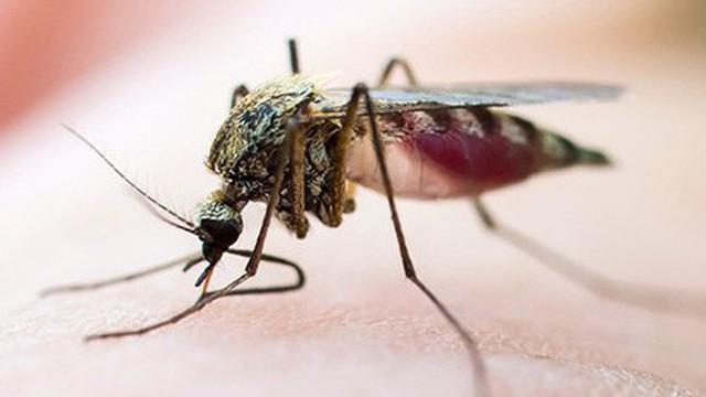 Không phải do 'ăn ở', 5 lý do này khiến bạn bị muỗi đốt nhiều hơn người khác